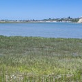 Upper Newport Bay saltwater marsh.- The Complete Guide to Rancho Palos Verdes, California