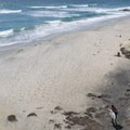 A quiet day at Swami's.- Southern California's Best Beaches
