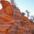 Careful of the narrow and difficult climb to Angels Landing.- West Rim Trail, Lava Point to Zion Canyon