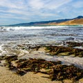 Seaweed along Jalama Beach.- Best of Santa Barbara: Beaches, Camping, Parks, and Trails