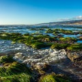 Parts of Jalama Beach are rocky with abundant seaweed.- Best Adventure Towns in California