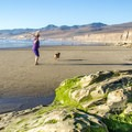 An empty open beach is a perfect place to let the pup stretch out.- Dog Etiquette for Coastal Adventures
