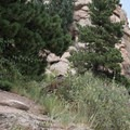 Bombing the Sisters Trail near Evergreen.- Colorado's Best Mountain Biking