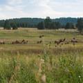 Elk Meadow + Bergen Peak Loop: A few friends on the trail.- 10 Classic Denver Mountain Biking Trails