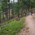 Mule Deer Loop: Cruising up the Blue Grouse Trail.- 10 Classic Denver Mountain Biking Trails
