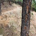 Switchbacking climb in Betasso Preserve.- Colorado's Best Mountain Biking