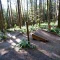 Trail gap on Drip Torch.- L.L. Stub Stewart State Park