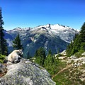 Mount Daniel and a mountain goat near Tuck and Robin Lakes.- Best Hikes to See Mountain Goats