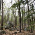 Trees and boulders at Manchester Cedar Swamp.- 10 Great Hikes Near Concord, New Hampshire