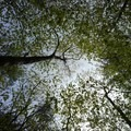 Spring canopy at Manchester Cedar Swamp.- 10 Great Hikes Near Concord, New Hampshire