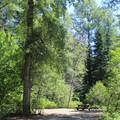 Typical site at Tumwater Campground.- Great Camping Near the Enchantments