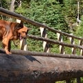 A bridge crossing the West Fork of the Wallowa River.- Our 10 Favorite Dog-Friendly Backpacking Trips