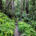 Lush redwood forest near Santa Cruz.- Best U.S. Desert, Mountain, and Beach Towns