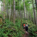 The Greg Ball Trail.- The Stately Serenity of Old-growth Forests