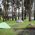 Typical tent sites at Nāmakanipaio Campground.- Hawai'i Volcanoes National Park
