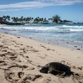 Kuki'o Beach, Big Island.- 25 Photos that will Convince you to visit Hawai'i
