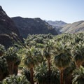 Palm Canyon, Indian Canyons.- Best Day Hikes Near Palm Springs