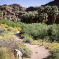 Palm Canyon Trail, Indian Canyons.- Best Day Hikes Near Palm Springs