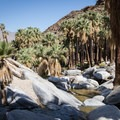 Palm Canyon Trail, Indian Canyon.- Best Day Hikes Near Palm Springs
