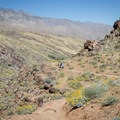 The Victor Trail, Indian Canyons.- Best Day Hikes Near Palm Springs