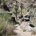 The trail to West Fork Falls in Indian Canyons.- Best Day Hikes Near Palm Springs