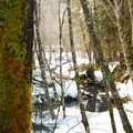 Snowy trails through the forest at Breitenbush.- Portland's Nearest Hot Springs