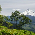 Bald Butte Hike: View looking south at Mount Hood (11,250 ft).- Wildflowers in the Columbia River Gorge - 10 Hidden Gems