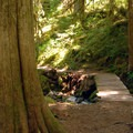 Hiking in the Opal Creek Wilderness.- Best Fall Hikes Near Portland