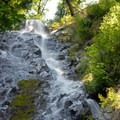 Wilson Falls.- Saving Oregon's State Forests