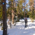 Snowshoeing along the Porcupine Loop. - The Best Snowshoeing Near Bend, Oregon