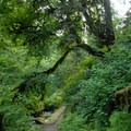 The trail toward Munson Creek Falls.- Exploring Oregon's Coastal Waterfalls