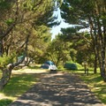 Typical campsite at Nehalem Bay State Park Campground.- Let's Go Camping