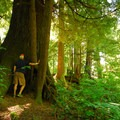 Giant Sitka spruce (Picea sitchensis) in Oswald West State Park.- Must-See Oregon Coast State Parks