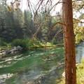 Ponderosa pine (Pinus ponderosa) along the Deschutes River Trail's South Canyon Reach.- 30 Best Hikes Near Bend, Oregon