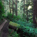Cape Lookout Trail.- 12 Epic Hikes for You and Your Dog in the Pacific Northwest