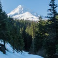 A peek at Mount Hood along the Cloud Cap Trail.- Great Cross-Country Ski Trails on Mount Hood