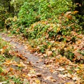 The Maple Trail leaves from Saltzman Road.- Best Fall Hikes Near Portland