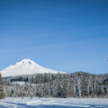 Mount Hood (11,250 ft) from Grave's Summit Meadow.- Great Cross-Country Ski Trails on Mount Hood
