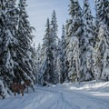 Cross-country skiing the Trillium Lake Loop near Mount Hood.- Last-Minute Spring Break Ideas