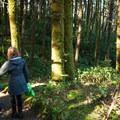 The Hobbit Trail portion of the Oregon Coast Trail.- Navigating the Oregon Coast Trail