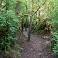 A section of the Oregon Coast Trail near Carl G. Washburne Memorial State Park.- Navigating the Oregon Coast Trail