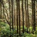 The Hobbit Trail.- 3-Day Itinerary For Florence, Oregon