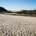 Oregon Dunes National Recreation Area.- Oregon Dunes Restoration
