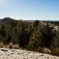 View west over the Oregon Dunes National Recreation Area.- Oregon Dunes Restoration