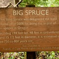 Informational sign at the Cape Meares Big Spruce.- The Tillamook Bay Heritage Route