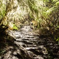 Sections of the Oregon Coast Trail lead through incredibly dense vegitation.- Navigating the Oregon Coast Trail