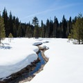 Deep snow on the loop trail around Clear Lake Butte.- Snowshoeing on Mount Hood