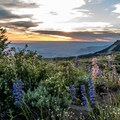 Wildflowers and views at Lands End Observatory.- Finding the Perfect Sunrise and Sunset Spots