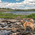 Stopping for a drink along the Twin Lakes hike.- A Guide to Water-Based Adventures With Your Dog