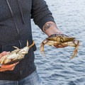 Dungeness crab is an Oregon delicacy and relatively easy to catch during fall.- Oregon Fall Adventures